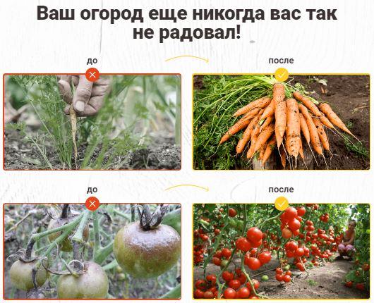 Как заказать удобрение из одуванчиков для томатов
